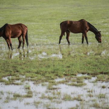 Már kilenc szakaszon van belvízvédelmi készültség Békés megyében
