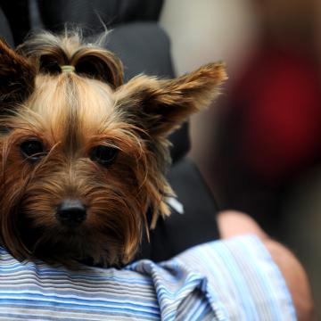 Megtalálták az eltűnt kutyát