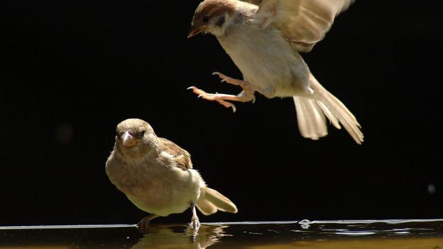 Itassuk a nyári hőségben a madarakat