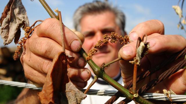 A fagykár sújtotta gazdák is kaphatnak teljes támogatást az Agrár Széchenyi Kártya hitelhez