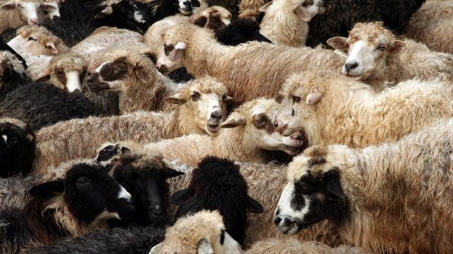 Juhra, kecskére még pályázhatnak, marhára, sertésre baromfira elfogyott a támogatás