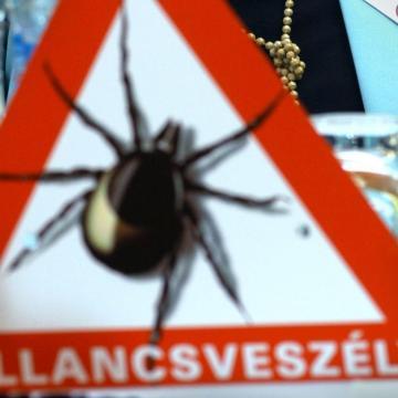 Most tetőzik a kullancsveszély - a védőoltás Lyme-kór ellen hatástalan