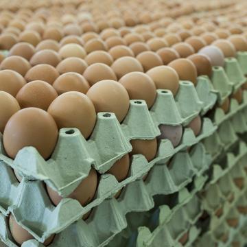 Több csirkét, pulykát és tojást ehetünk jövőre