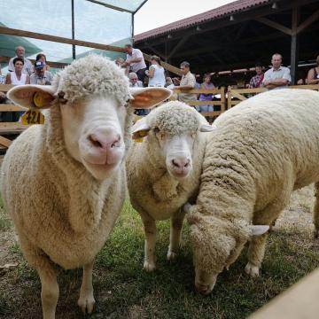 Farmer Expo : több megyéből is részt vettek a szakmai programokon