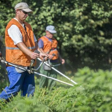 Másfél millió hektár parlagfűvel fertőzött területet derítettek fel