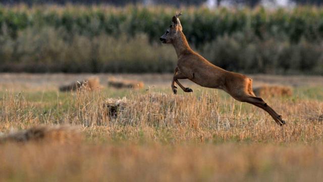 Országszerte egyre nagyobb probléma a vadkár