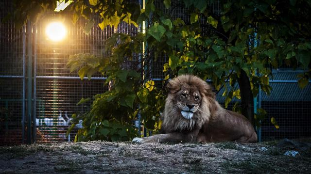 Pénteken rendezik az Állatkertek éjszakáját