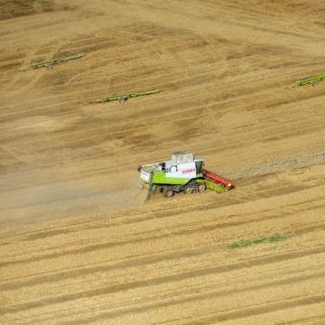 Mintegy nyolcmillió tonna kalászos gabona termett az idén