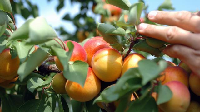 Elkészült a magyar zöldség-gyümölcs ágazat stratégiája