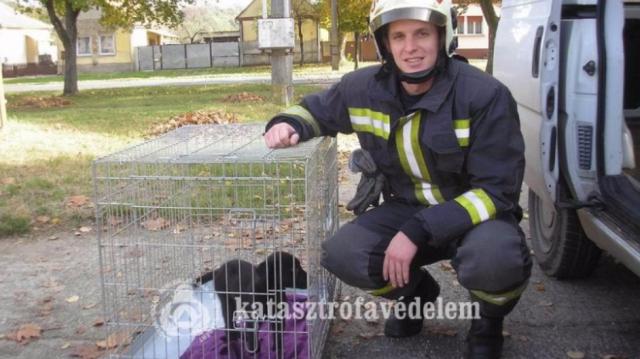 Kútba esett kutyát mentettek a barcsi tűzoltók