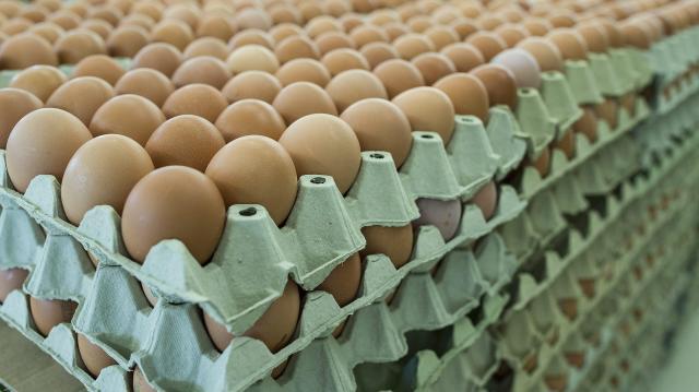 Szalmonellás lengyel tojás kerülhetett a boltokba