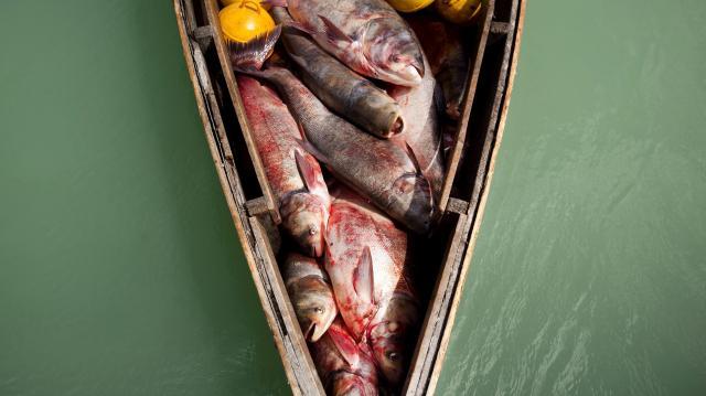 Továbbra is tiltott a kereskedelmi halászat a Balatonon