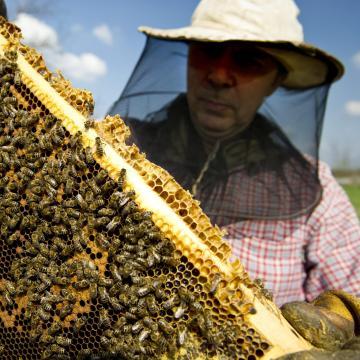 Gyenge évet zártak idén a méhészek