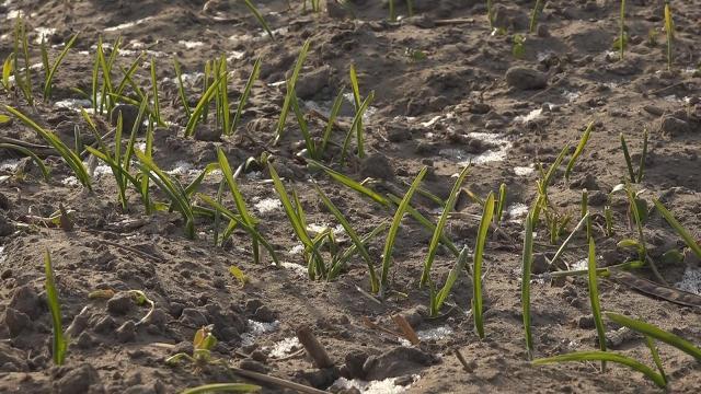 Hó nélkül nem az igazi a tél a mezőgazdaságban sem