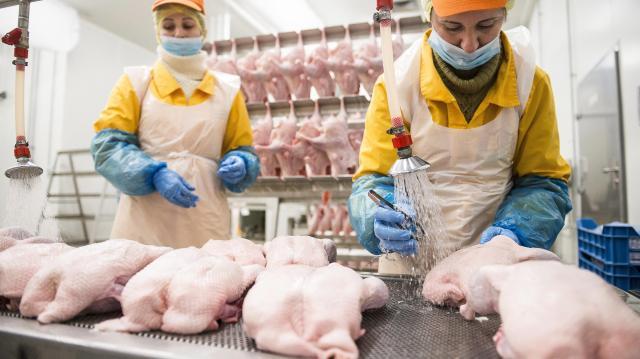 Madárinfluenza - Hiány van egyes liba- és kacsatermékekből