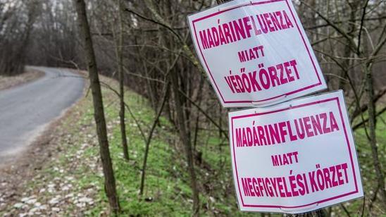 Győr-Moson-Sopron megyében is megjelent a madárinfluenza