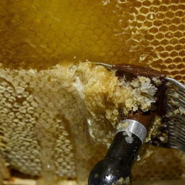 Pang a piac, nyomott a magyar méz ára