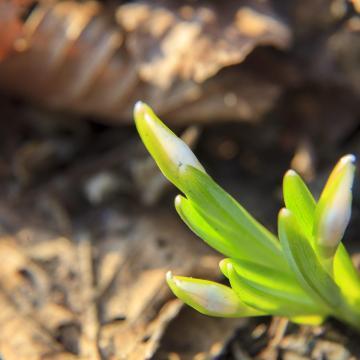 Már tavaszodik Somogyban