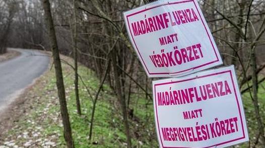 Feloldották a madárinfluenza zárlatot Bács-Kiskunban