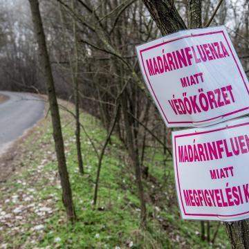 Március elején feloldhatják a madárinfluenza miatti korlátozásokat