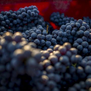 Változnak a szőlőértékesítés szabályai
