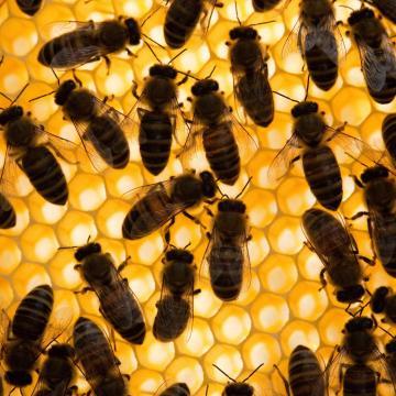 Uniós mézadatbank jöhet létre?