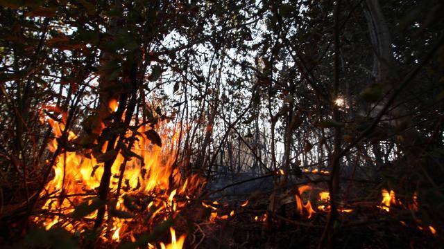 Minden megyében pusztított szabadtéri tűz szerdán