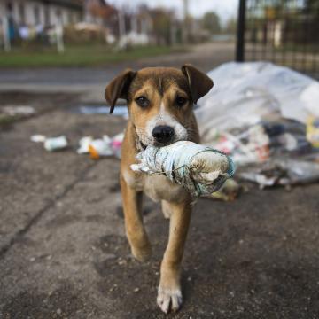 A felelős állattartás napja: május 6.