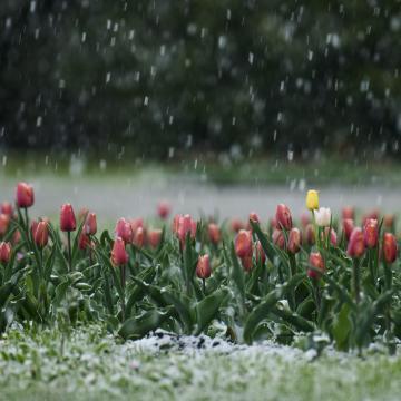 Pénteken visszatér a tavasz
