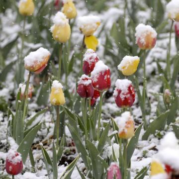 Péntekre visszatér a tavasz