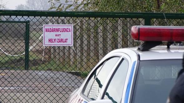 Egy megyét kivéve visszakapta madárinfluenza-mentes státuszát Magyarország