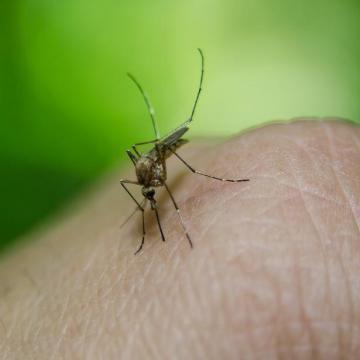 Országszerte folytatódik a szúnyoggyérítés