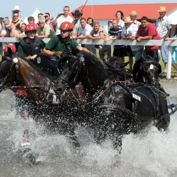 Jövő héten kezdődik a póni lovas Európa-bajnokság Kaposváron