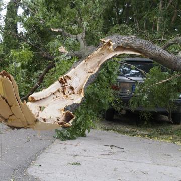 Vihar - Kidőlt fák okoztak gondot a vihar után
