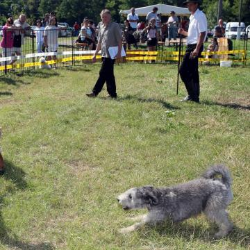 Magyar pásztorkutyák versengenek Szaporcán