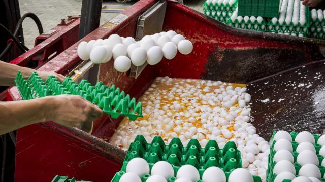 Nem emeli itthon a tojás árát a szennyezés miatti hiány