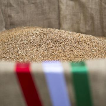 Összeöntötték Nemeshanyban a Magyarok kenyeréhez szánt búzát