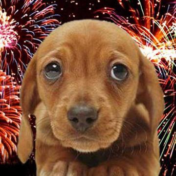 Nem mindenkinek szórakozás a tűzijáték