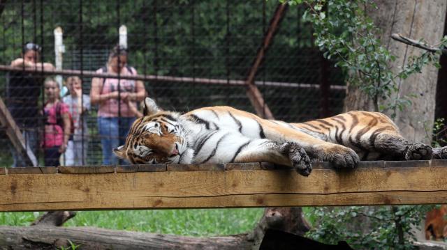 Pénteken rendezik meg az Állatkertek éjszakáját