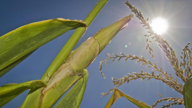Sok napsütés és kánikula várható az utolsó augusztusi hétvégén