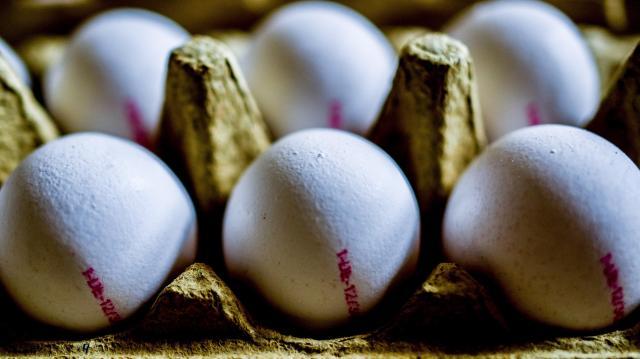 Szennyezett tojás - A gyanús termékek visszahívását kérik a baromfitartóktól