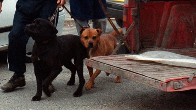 Kutya ölt meg egy nőt Borsodban, gazdáját elítélték