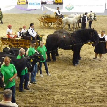Nyuszisimogató és próbaveteményező mellett 200 ló is lesz a KÁN-on