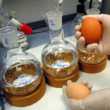 Szennyezett tojás - Két feljelentést tett a Nébih, a jogsértő termékeket kivonták a forgalomból
