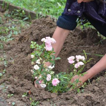 Adományokból virágosítanak Szerdahelyen