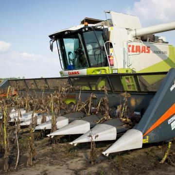 Kisebb idén a kukorica és a napraforgó hozama Békés megyében