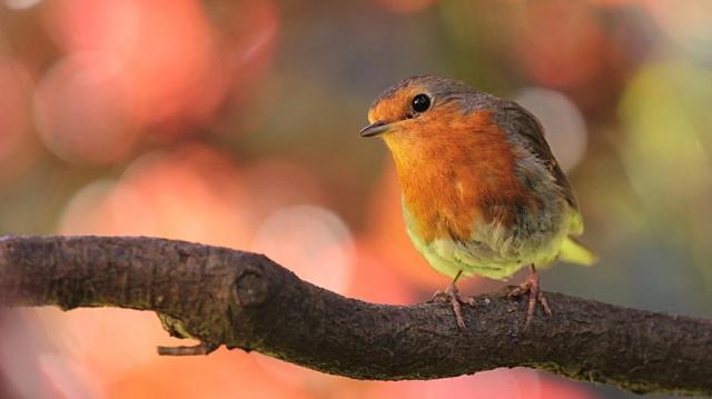 A madarakról szól a hétvége – madármegfigyelés országszerte