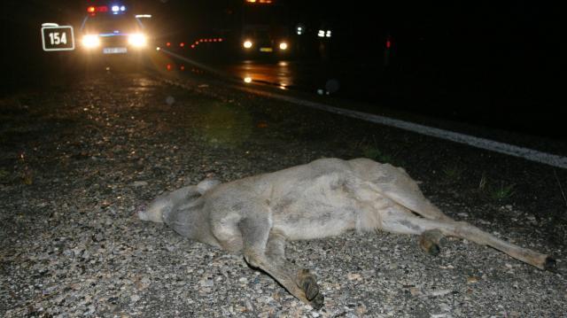 Fokozott a vadveszély az utakon
