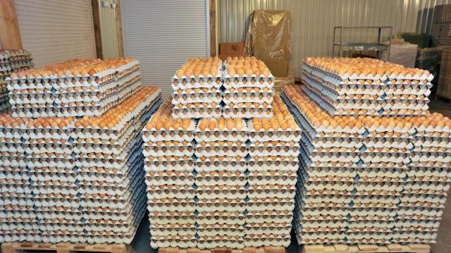 Tojásszövetség: növelni kell a magyarországi tojástermelést