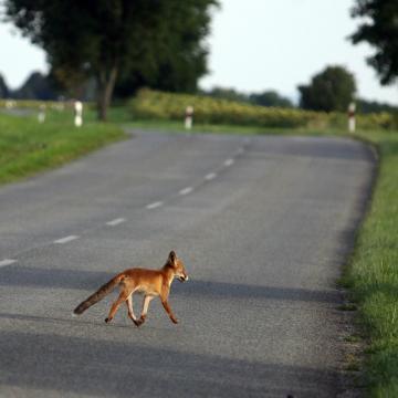 A vaddal való ütközés veszélyére hívja fel a figyelmet a Mabisz